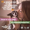 National Adopt A Shelter