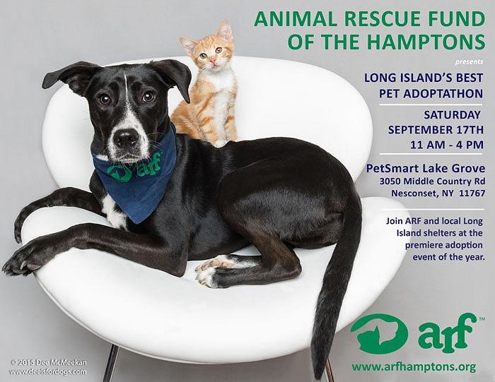 Dog Adoption Events Long Island Ny