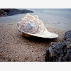 Sea Shell Ornaments at Th