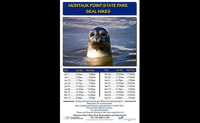 Seal Walks at Montauk Point State Park
