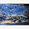 7-in-Heaven Aquarium Visi