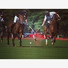 7-in-Heaven Polo at the P
